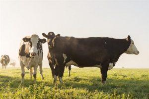 Subsidies melkveehouderij