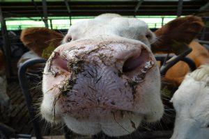 Begroting LNV: duidelijkheid voor de Nederlandse landbouw en natuur