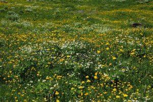 Soortenrijk grasland scoort het beste op ondergrondse opbrengst