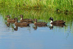 Waterschap Zuiderzeeland en LTO Noord werken samen aan een betere waterkwaliteit
