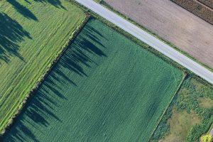 Grasmonitor: Straks maaien of nu meer gras in de koe?