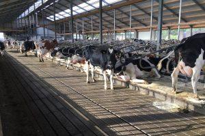 Minder drijfmestsystemen bij nieuwbouw melkveestallen
