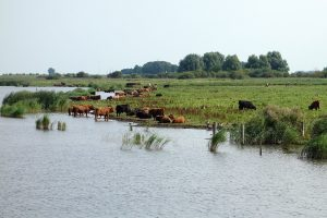 Kringlooplandbouw voor beter waterbeheer