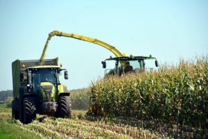 Ook met mais gaan we de nitraatrichtlijn halen