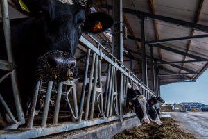 """""""Samen aan de slag om klauwgezondheid op de melkveebedrijven te verbeteren"""""""