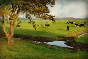 CBS: Lagere melkprijs en hogere productie- en voerkosten in 2020