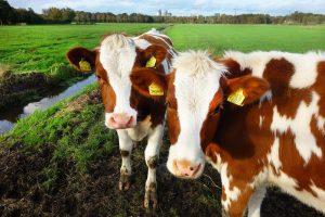 FrieslandCampina-biologische garantieprijs maart 2021