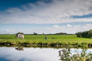 Rabobank presenteert toekomstvisie veenweidegebieden