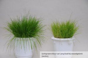 Zwavel geeft waarde aan uw gras