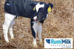 Samenwerking Nukamel en RumiVar op Nederlandse opfokmarkt