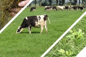 Goed ruwvoer is de beste basis voor een gezonde melkproductie
