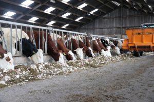 Extra energie in het rantsoen met voederbieten