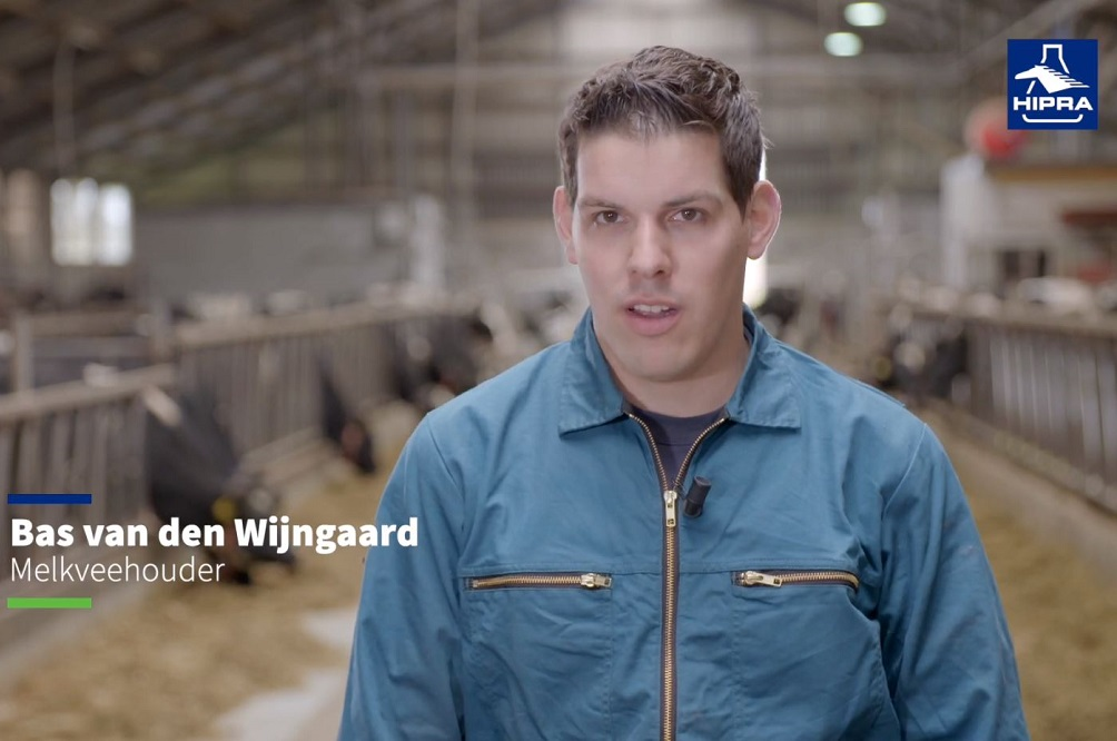 Last van koeien met slecht genezende of terugkerende mastitis?
