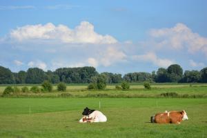 Verder onderzoek naar stikstof, broeikasgassen en biodiversiteit