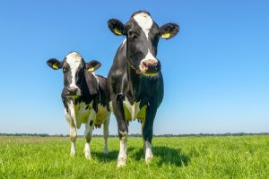 Deelnemers Dutch Dairy Challenge 2021 bekend