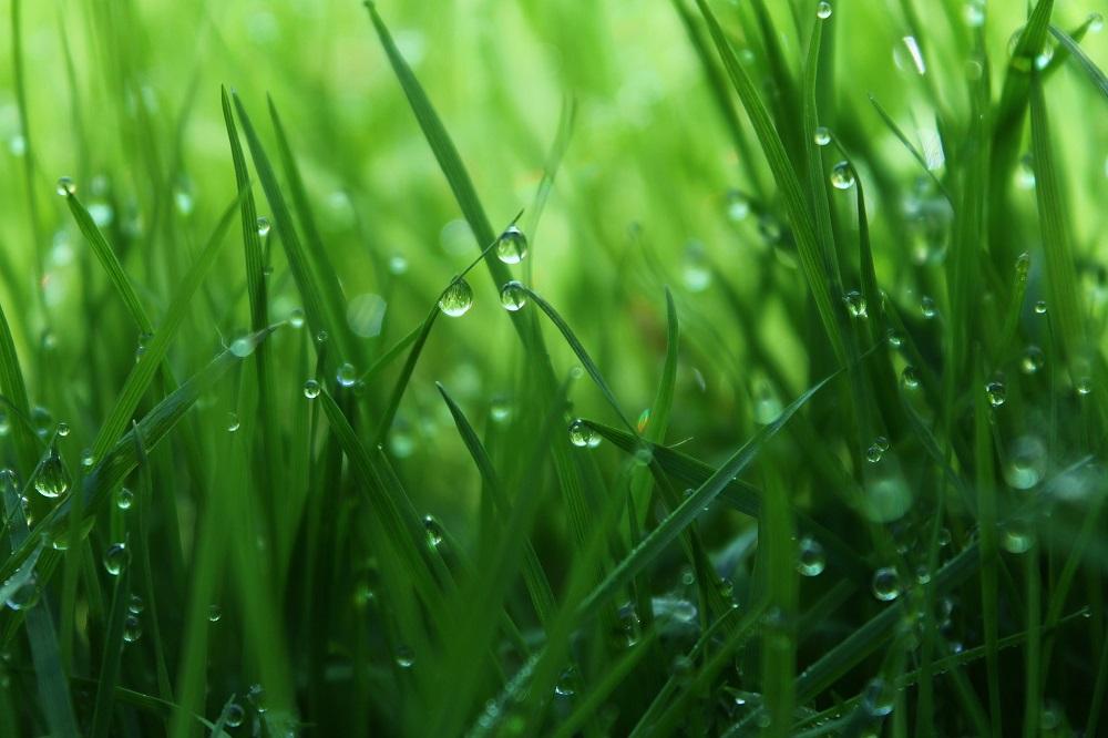 Tips voor verzorging van grasland in het voorjaar