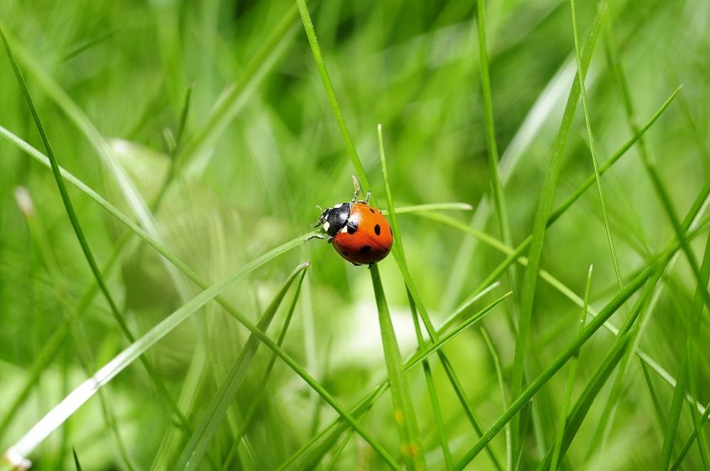 Meer insecten waargenomen op kruidenrijke weilanden in Friesland