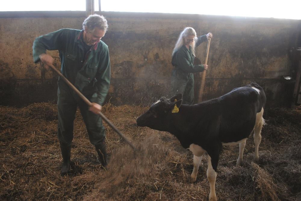 Flingk Van Popta melkveebedrijf melkveehouderij