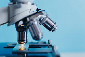 Vlaanderen bezig met onderzoek naar genetisch gemodificeerde maïs