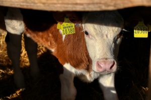 FrieslandCampina verkoopt Nutrifeed diervoedingsactiviteiten aan Denkavit
