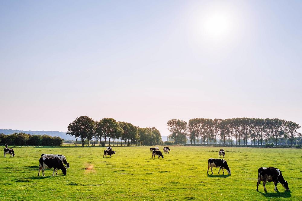 ''Weiden is zoveel mogelijk gras omzetten in melk''