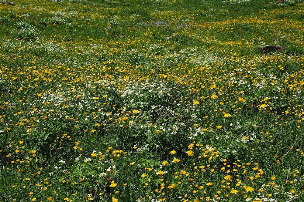 De meerwaarde van kruidenrijk grasland voor weidevogel, koe en boer