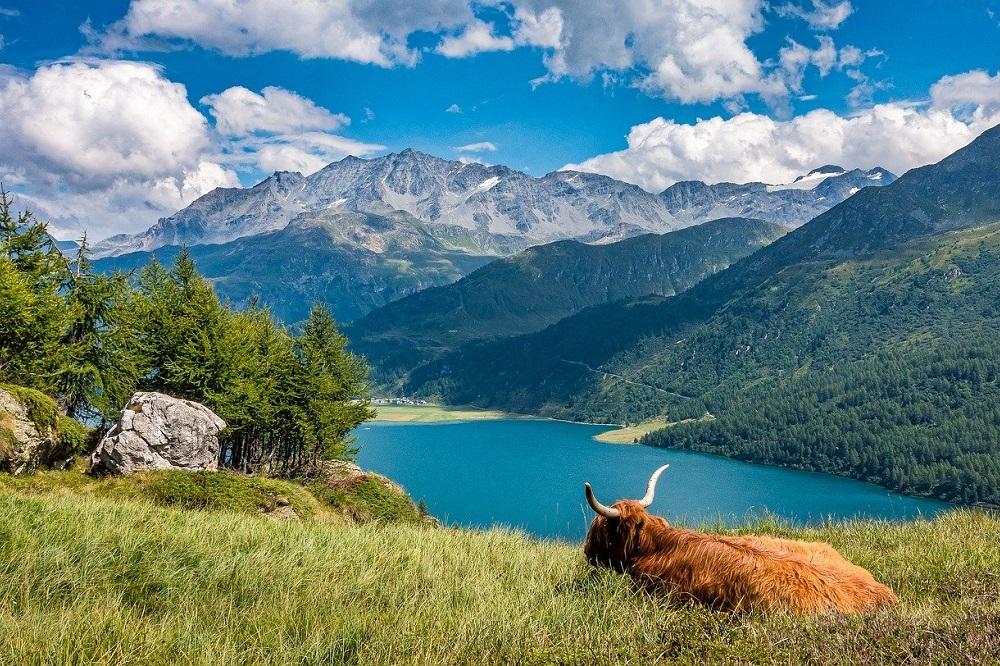Referendum: Zwitserse boeren vrezen voor nieuwe wet