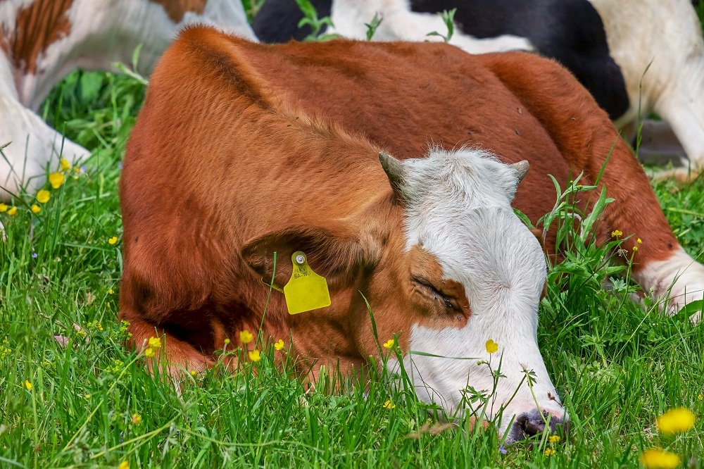 LTO: Aanpassingen Wet Dieren teleurstellend en zorgelijk