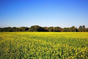 Hoe maak je de keuze voor een groenbemester?