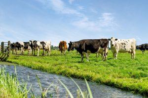 Hoe haal je voldoende eiwit uit ruwvoer? September is de tweede meimaand voor gras