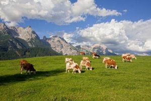 Oostenrijk heeft handelsoverschot in landbouwgoederen