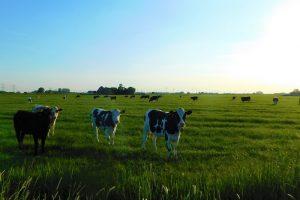 Keurmerken en Chinese zuivelvraag houden de melkprijs dit jaar hoger