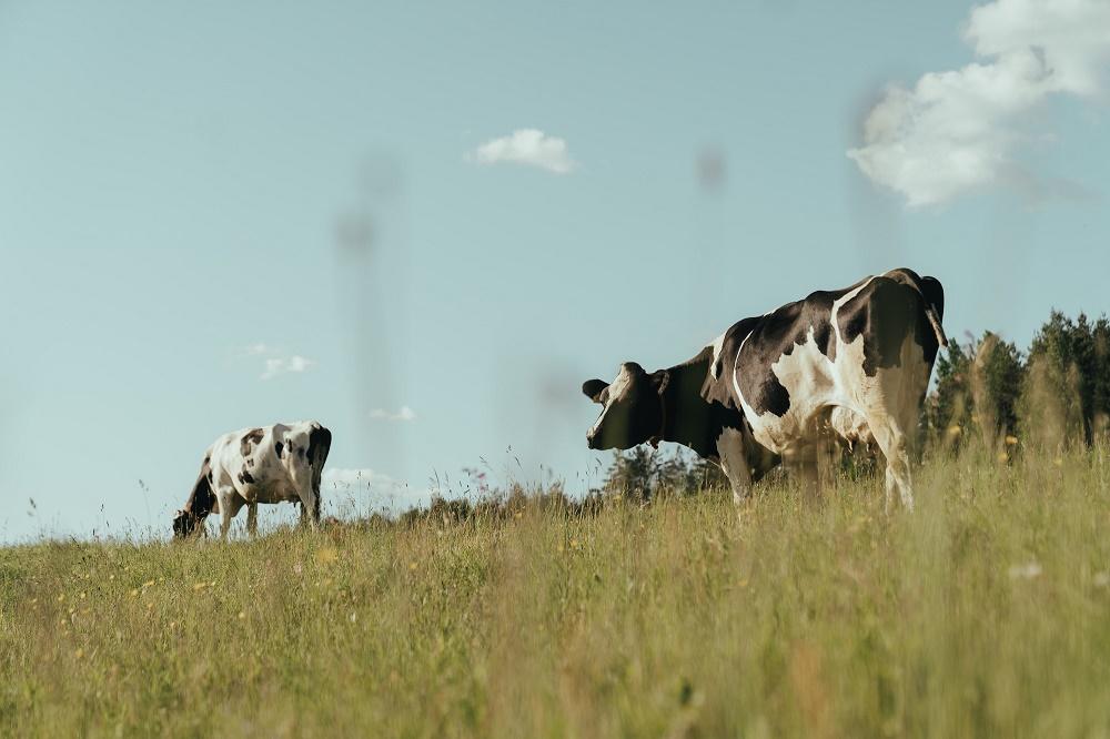 Ierse melkveehouder evan geïnspireerd door Nederlandse collega's