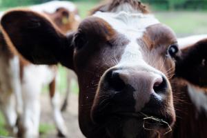 Prijsindex melk af boerderij gestegen ten opzichte van maart