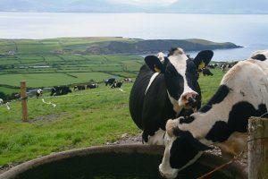 Gekkekoeienziekte ontdekt bij dier in Verenigd Koninkrijk