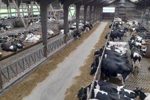 Met schoon water is de eigen weerstand van de koeien op topniveau.