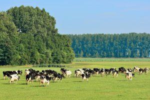 Green Deal: Onzekere gevolgen voor de landbouwinkomens